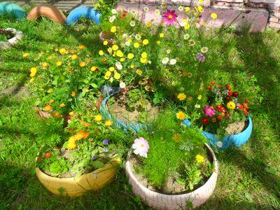 Какие растения можно сажать на территории детского сада 32